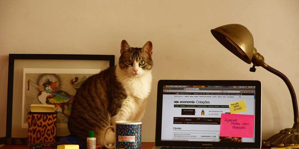 HOME OFFICE E PETS